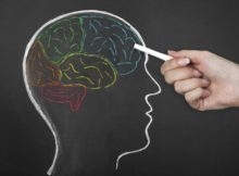 neuroscience et education