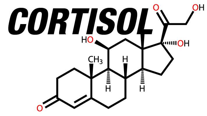 cortisol tout savoir
