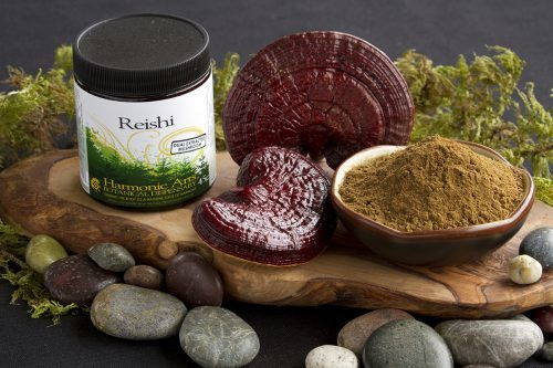 reishi contre le cancer